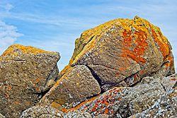 Lichen_Rocks_31_Jan_2021.jpg
