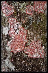 Life_on_tree_bark.jpg