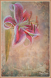Lily_Flower_Texture_2018.jpg