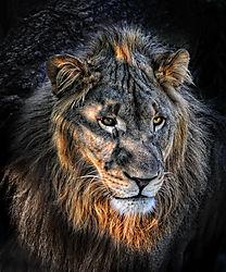 LionSM.jpg