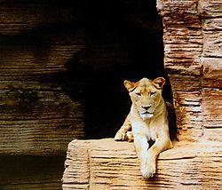 Lioness_for_Nik_.JPG