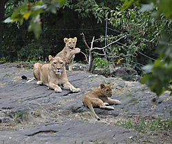 Lions_and_Tigers_and_Bears_6_.JPG