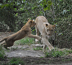 Lions_and_Tigers_and_Bears_7_.JPG