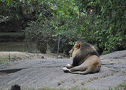 Lions_and_Tigers_and_Bears_8_.JPG