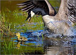 Listen-to-Your-Mother-b_-John-Straub_Nature_January2020PSAN.jpg