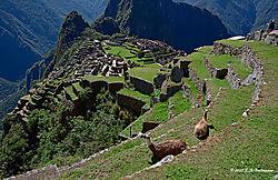 Llama_s-Eye-View-of-Machu-Picchu-PPW.jpg