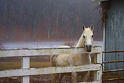 Lone_Horse.jpg