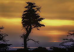 Lone_Tree_at_Cadillac_Mountain_2_CR.jpg