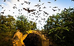 Low_Res_Bats_chiroptorium_1_august_2020.jpg