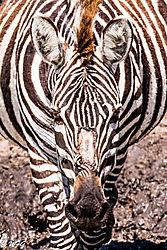Masai_Mara-2496.jpg