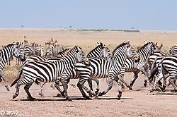 Masai_Mara-3332.jpg
