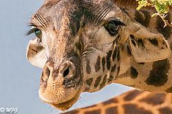 Masai_Mara-6537.jpg
