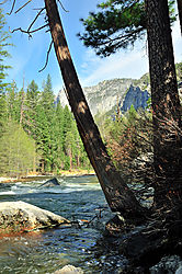 Merced_River_Tree.jpg