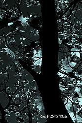 Midnight_Trees.jpg