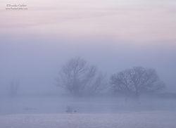 Misty_Sunrise_1_San_Joaquin_Valley_Wetlands.jpg