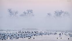 Misty_Sunrise_2_San_Joaquin_Valley_Wetlands_copy.jpg