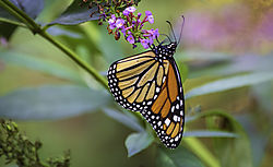 Monarch_10_10_18_1800.jpg