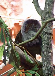 Monkey--125_at_5_6_200iso.JPG