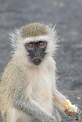 Monkey-1663.jpg