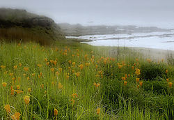 Montana_de_Oro_-_Poppies_by_the_Sea.jpg