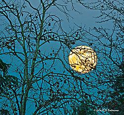 Moonlight-through-the-Trees-ver2.jpg