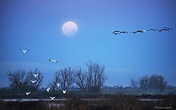Moonset_1_San_Joaquin_Valley_Wetlands.jpg