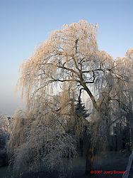 Morning_Impression_Winter_1.jpg
