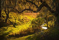 Mossy_Creek.jpg