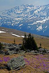 Mountains_in_bloom.jpg