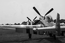 Mustangs2BW_better.png