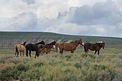 Mustangs_Sand_Wash_Basin_632020.jpg