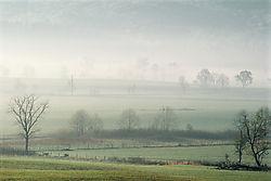 Mystical_Meadow.jpg