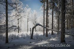 N61_1721-Bexs.jpg