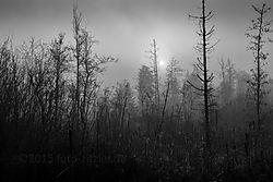 N6D_4576xs.jpg