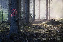 ND7_7699-Bexs.jpg