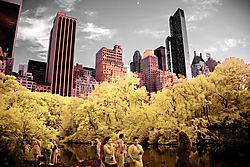 NYC_from_CENTRAL_PARK_.jpg