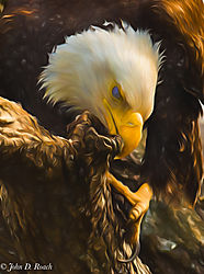 N_2-Eagle_Feaking-DA.jpg