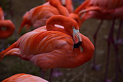 National_Zoo_8_Feb_15_V1_111_.JPG
