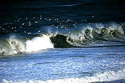 Nauset-Beach-1-sm.jpg