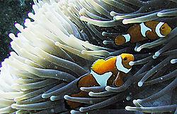 Nemo_P9090222_2.jpg