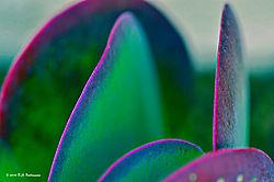 Neon-Edges-PPW.jpg