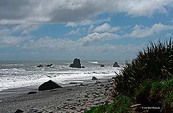 New-Zealand-Beach-Scene-2-PPW.jpg