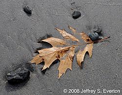 New_England_Beach_in_the_Fall.jpg