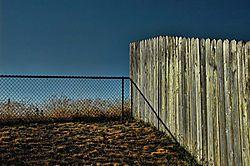 Nikki_s_Backyard.jpg