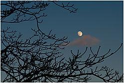 Nikonians_Moon_Shot.jpg