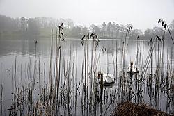 Nikonians_Swan_Lake.jpg