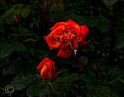 Notre-Dame-Garden-.jpg