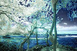 ONEKAHAKAHA_2742.jpg