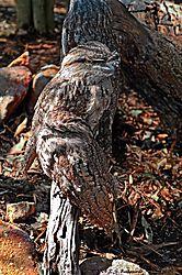 OWL_PPW.jpg