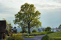 Oak_Spring.jpg
